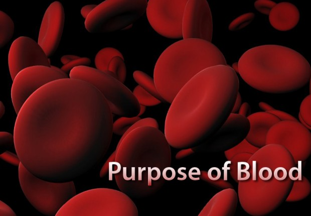 Purpose of Blood